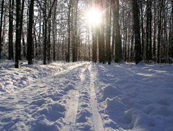 winter-trail